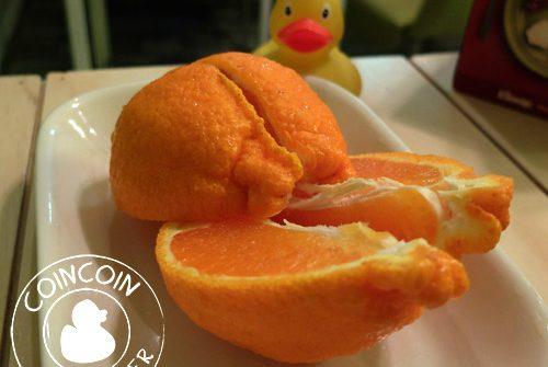 célèbre-orange-jéju-corée-sud