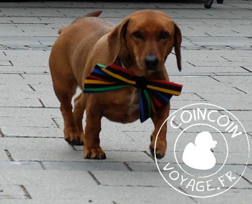 carnaval munich chien