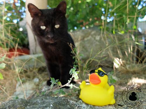 Coincoin et le chat