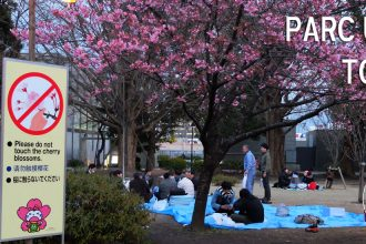 hanami parc ueno tokyo