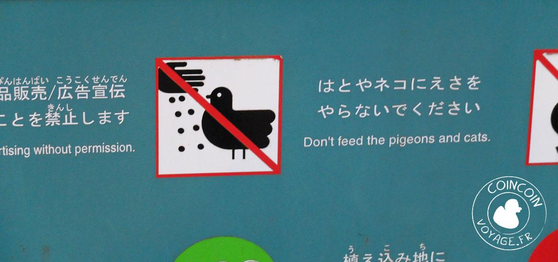 pigeon parc ueno visite tokyo