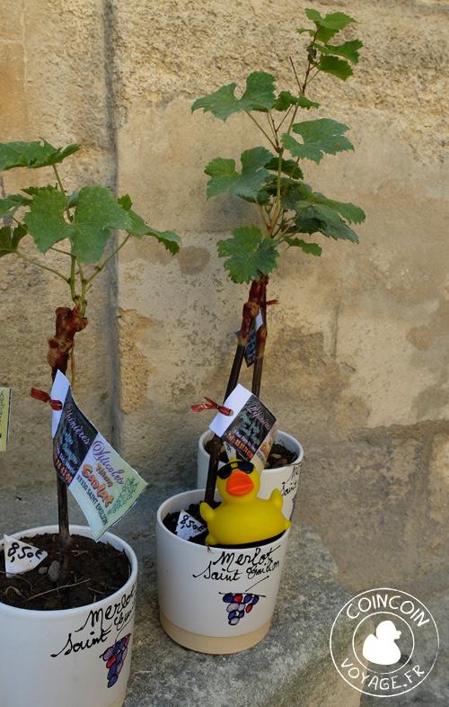 saint-emilion visite vigne